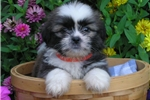Picture of Charlie, Male, $750
