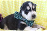 Picture of Denver, Male, $945