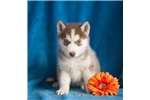 Picture of Emmie, Female, $895
