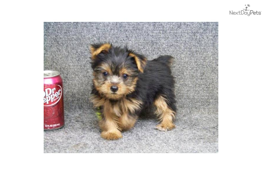 Prissy Names For Female Dogs