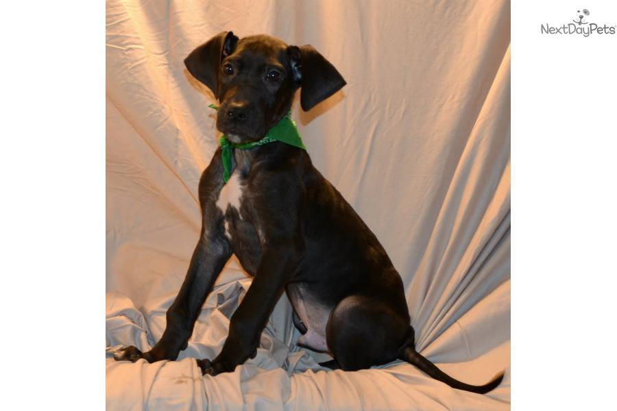 ... dog breeds small house dog breeds black dog breeds find dog breeds