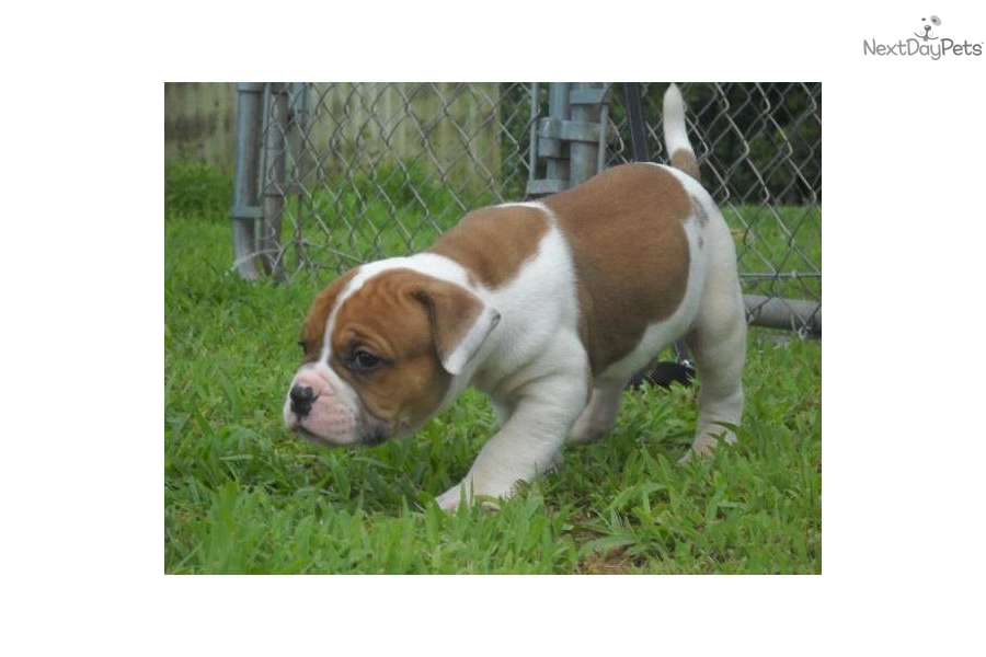 Dogs For Sale Evansville In