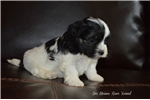 Picture of Little Marley