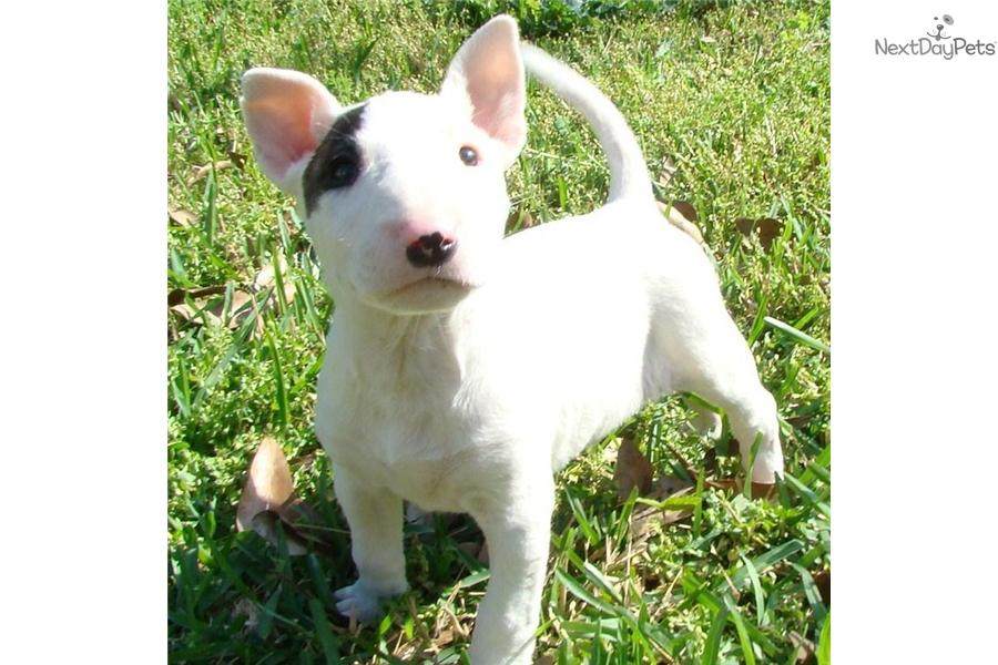 Puppies & Dogs for Sale from Dog Breeders