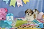 Picture of Tucker Cavachon Puppy   of Virginia