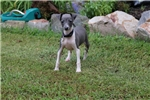 Picture of Bella Small Blue