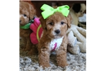 Picture of Ginger