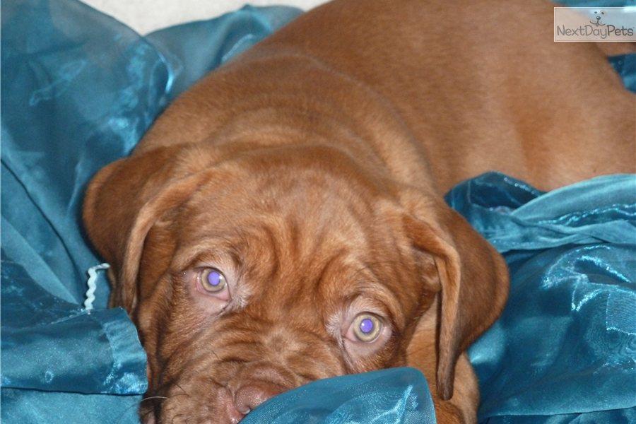 Dog Kennels Zanesville Ohio