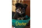Picture of Dexter