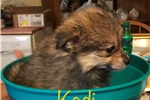 Picture of Kodii