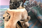 Picture of Baby Jessie
