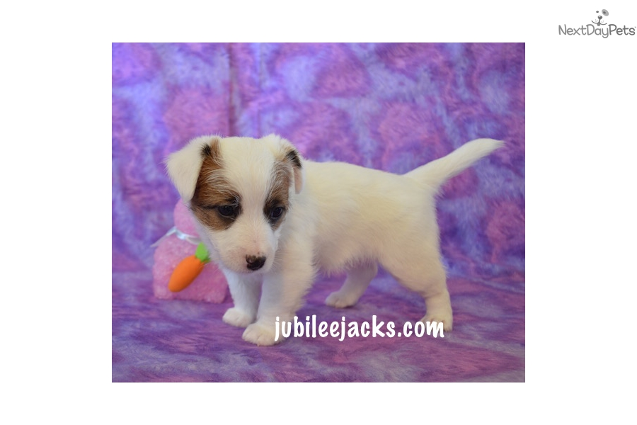 Waverly Akc Dog Show