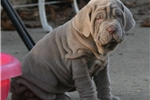 Picture of Rainbow pups Expected