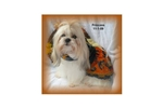 Picture of a Saint Berdoodle - St. Berdoodle Puppy