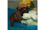 Picture of ADALIE