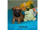 Picture of ADALIE
