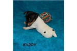 Picture of BUDDY ~ UKC