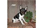 Picture of ABE ~ UKC