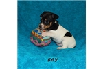 Picture of BAY ~ UKC