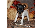 Picture of EGAN ~ UKC
