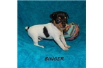 Picture of BINGER ~ UKC
