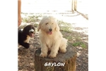 Picture of GAYLON