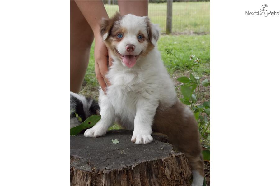 Free Puppies Dogs Victoria Bc