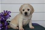 Picture of #1 Sandy Happy, Healtyy and Playful Baby Girl