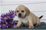 Picture of #1 Sandy Happy, Healtyy and Playful Baby Boy