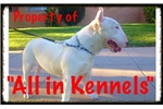 Miniature Bull Terriers for Sale | Puppy at 12 weeks of age for sale