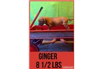 Picture of AKC Female-Ginger