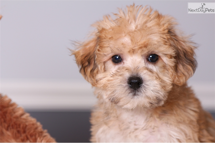 Dogs for Sale in Kelowna | Dogs on Oodle Classifieds