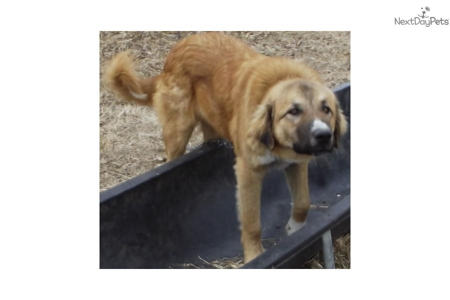 Dogs For Sale In Jackson Tn