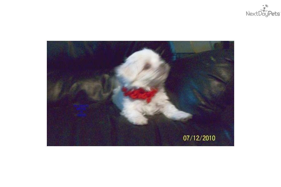 Good Boy Maltese Dog Names