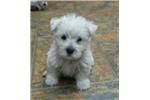 Picture of Tilly's Handsome boy - orange collar