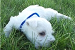 Picture of Tilly's georgous male blue collar