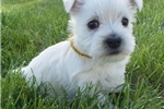 Picture of Tilly's awesome female gold collar