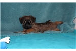 Picture of AKC - ARIEL