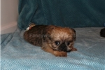 Picture of AKC TYLER