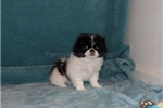 Picture of AKC Theresa