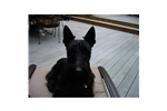 Featured Breeder of Scottish Terriers with Puppies For Sale