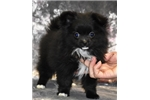 Picture of Teacup, sweet and loving little girl