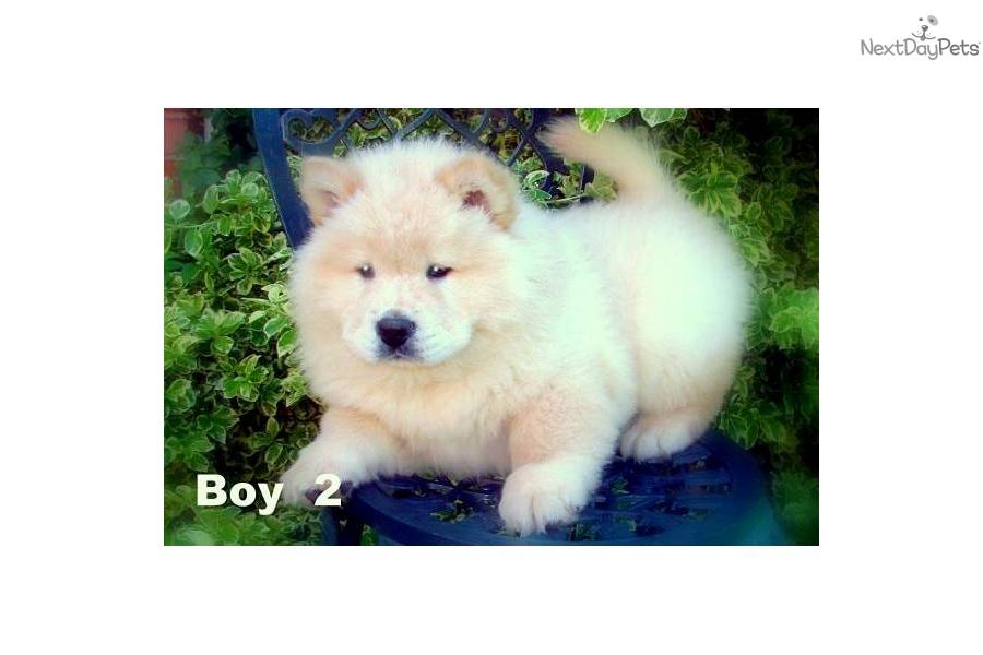 Sarnia Ontario Dogs For Sale