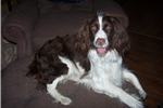 Picture of Roxie (Texas)