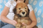 Picture of So Cute & Furry, He Reminds You of a Teddy Bear!!