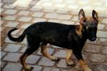 Picture of Mali M