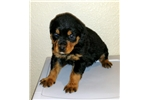 Picture of F1 Rott Derb