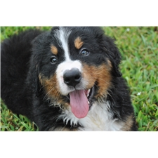 View full profile for Mountain Dogs