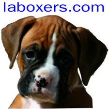 View full profile for LaBoxers.com