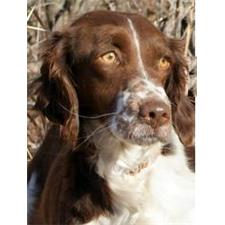 View full profile for Elkhorn Gun Dogs